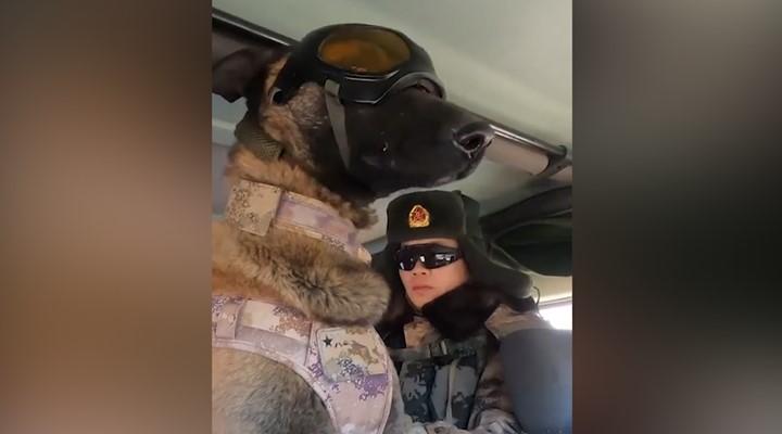 帥!軍犬佩戴遠程指揮係統快速追蹤