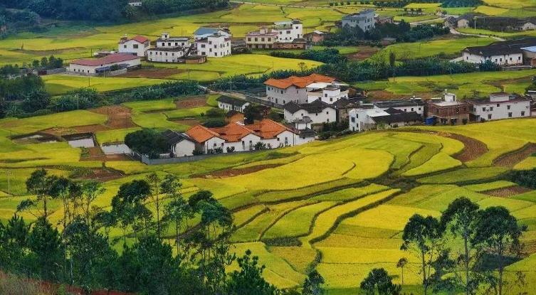 金融服務鄉村振興再加碼 監管部門要求擴大險資投入