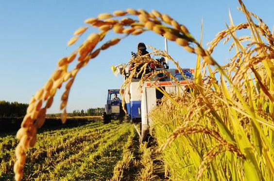 2022年農業保險保費收入有望達840億元