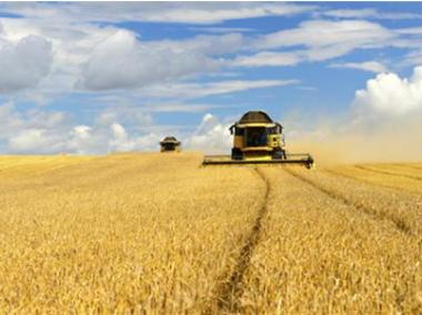 """農業保險新品迭出 因時因地捂實農民""""錢袋子"""""""