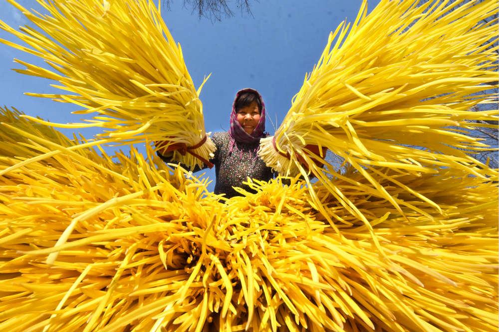 中華財險累計為農業生産提供風險保障超2.3萬億元