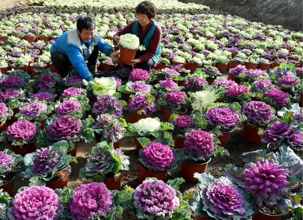 華農保險:發揮行業優勢 多措並舉助力脫貧攻堅