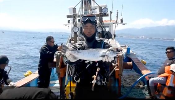 韓國企業欲進軍中國三文魚市場