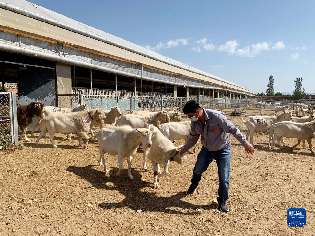 呼和浩特推进羊奶产业发展