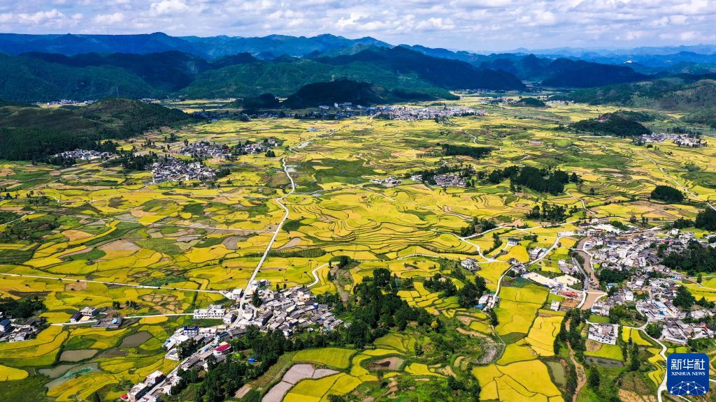 贵州:丰收的田野