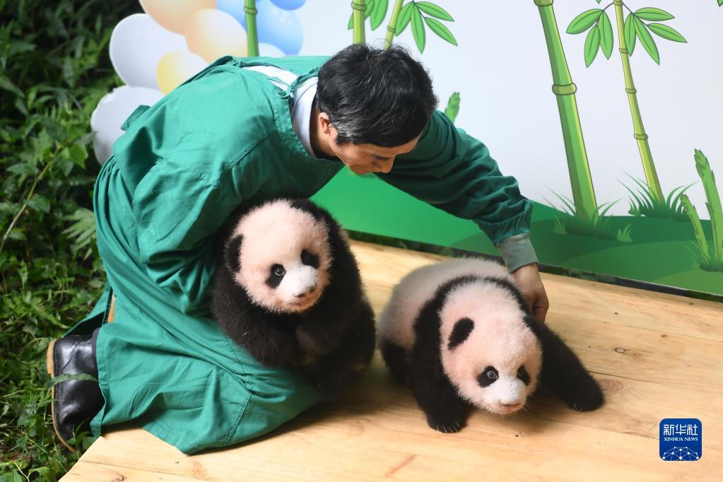 重庆动物园举行大熊猫双胞胎满百天征名活动 健康状况良好