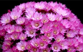 切爾西花展賞花卉