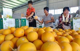 河北新河:設施農業助推3萬群眾穩定脫貧