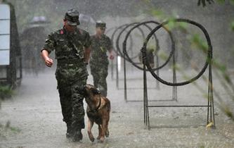 狼兵出擊 軍犬雨中跨障三連拍