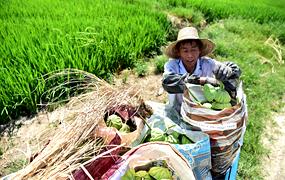 安徽:生態農業助增收