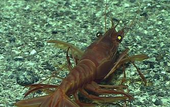 深海生物奇觀