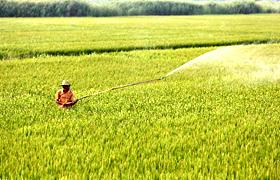 抗擊病蟲害 確保秋糧豐收