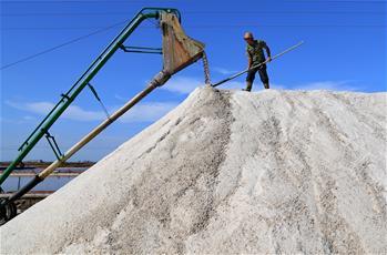 長蘆鹽區秋扒忙