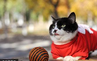 城市表情:萌貓拍寫真