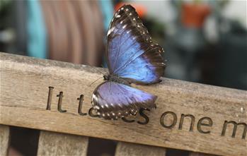 倫敦舉行奇異蝴蝶展