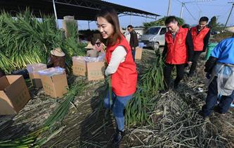 浙江湖州:基層黨員志願者助農搶收茭白