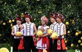 貢水白柚豐收文化節