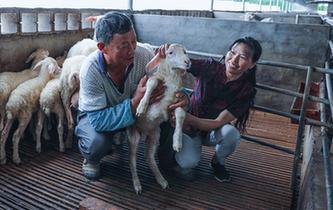 湖羊之乡长兴县吕山乡以产业帮扶 养羊致富