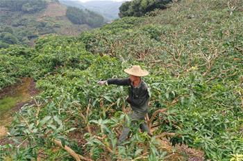 陕西省发展改革委卢建军主任召开稳增长工作会议