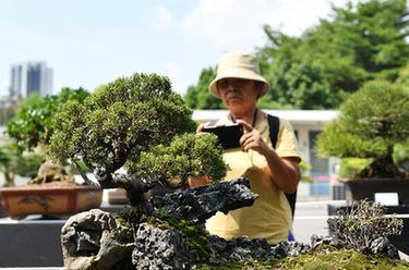 苍溪县大力推进人居环境整治提升群众幸福感