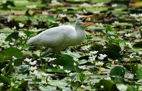 親近自然 樂享鳥趣