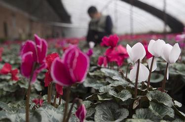 深圳發放10.5億元小微貸款促復工復產