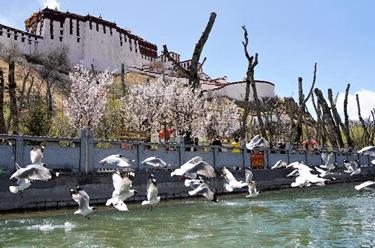 寧夏須彌山石窟壁畫百年后首次進行搶險加固