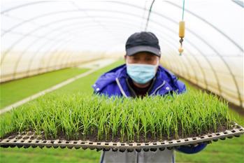 湖北特色农产品首次包机出省 助力荆楚大地经济复苏