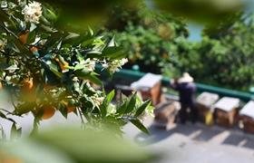 廣州推進市場采購貿易集聚區拓展試點