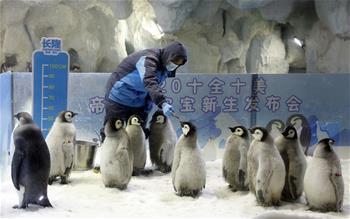 """哈尔滨2020年第一场雪降临 开启5个月超长""""冰雪季"""