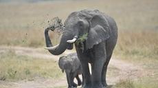 肯尼亞政府發布野生動物普查報告