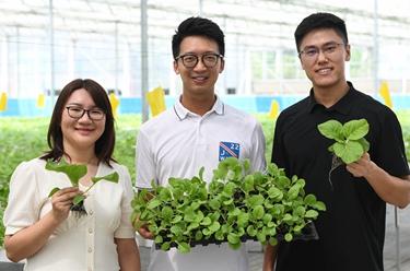 三位香港青年的蔬菜夢工廠