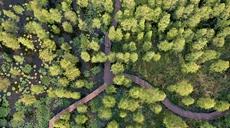 生態濕地 池杉靚影