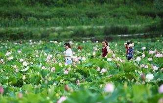 遂宁市生态环境局三措施抓好夏季秸秆禁烧工作