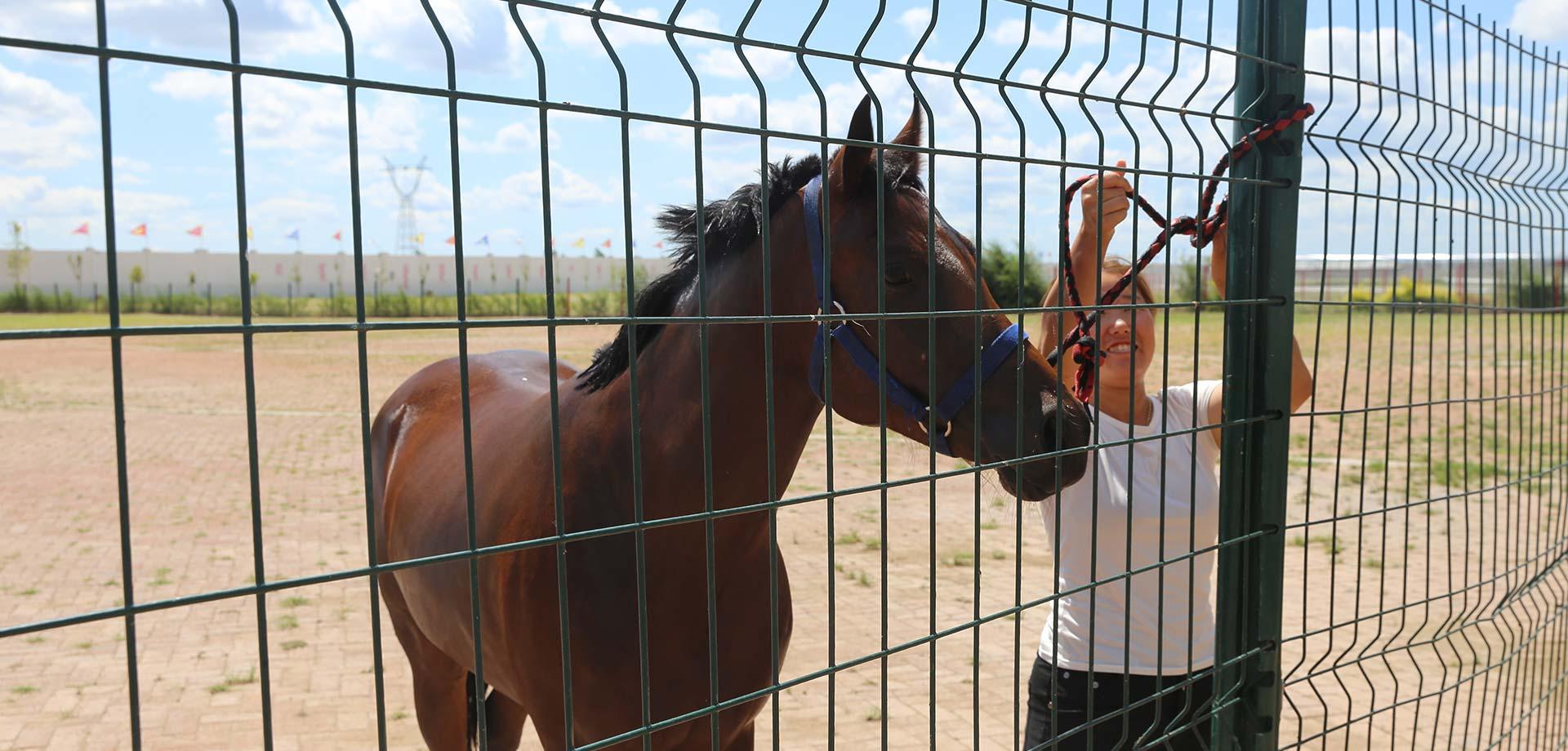 練馬師父女:隱居鬧市 與馬為伴