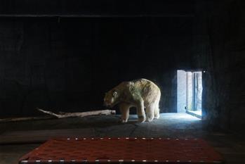 世界上首只在熱帶出生的北極熊被安樂死