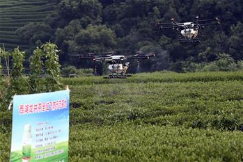 杭州西湖龍井茶園實施無人機飛防植保