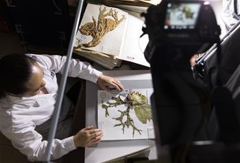 中國數字植物標本館標本數量已超600萬