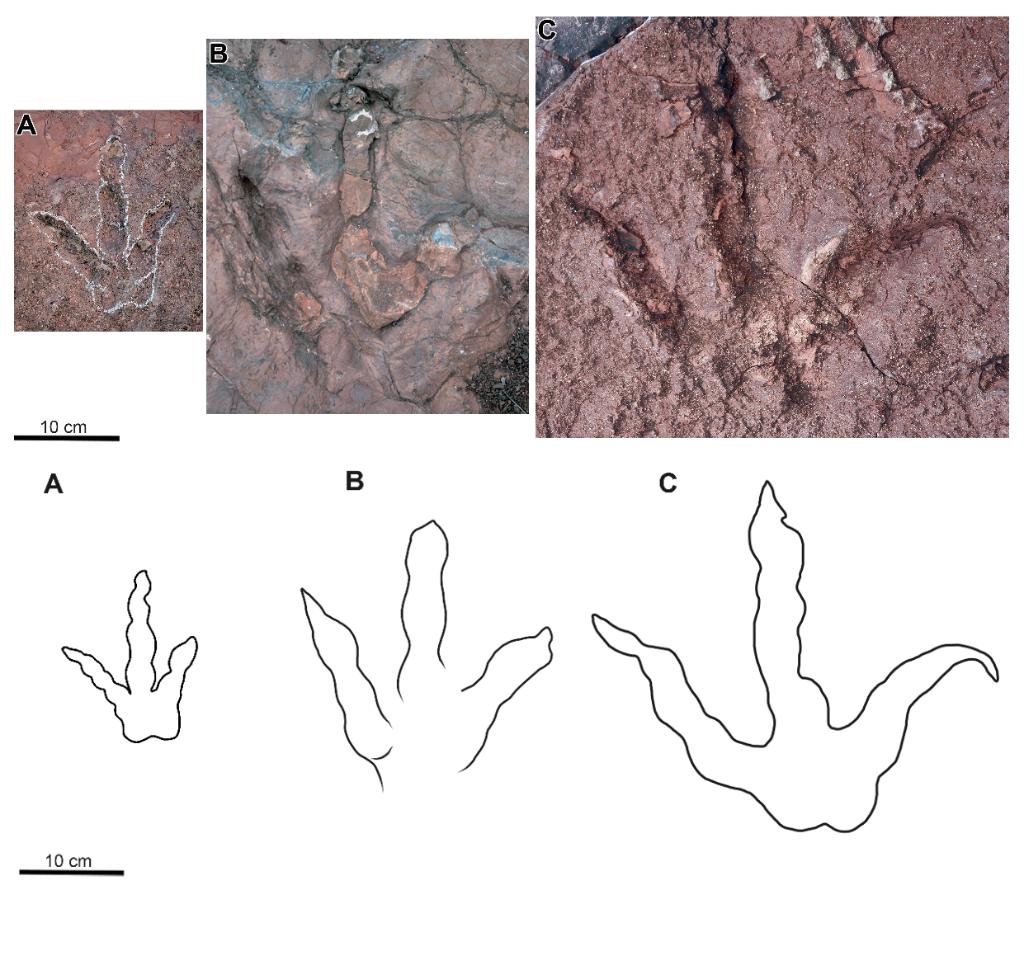 研究人员发现云南最大兽脚类恐龙足迹点