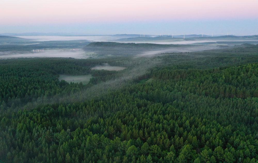 镜观·领航丨习近平牵挂的那片林