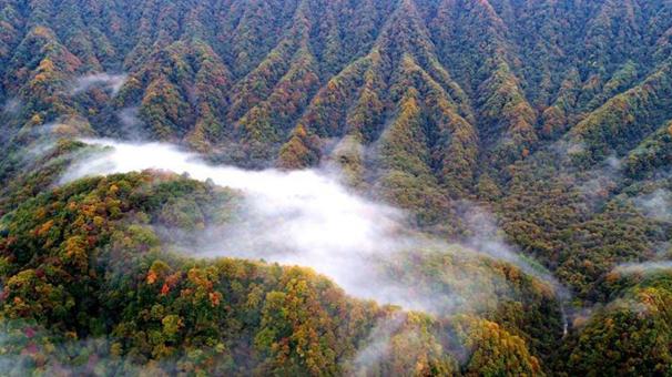 四川光霧山層林盡染雲霧繚繞如仙境