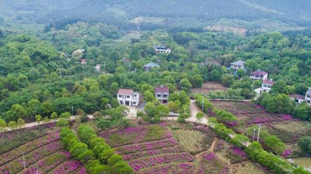新華社評論員:厚植生態文明 耕耘美麗中國