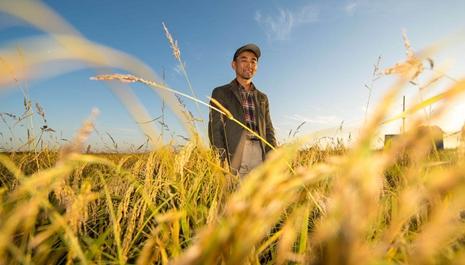 稻人有道——種糧大戶李學明的十余年堅守