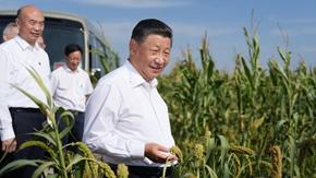 第一观察丨察夏粮、看秋粮,总书记今年考察中为何两次实地察看粮食长势