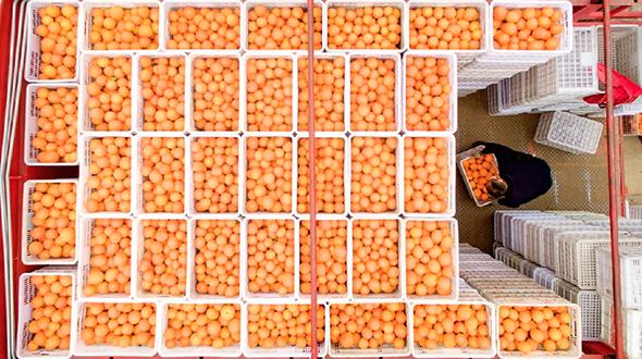 阿裏巴巴成為中國農民豐收節金秋消費季合作平臺