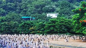 農民豐收看廣東丨中國農民豐收節廣東省主會場開幕式將在汕頭舉辦