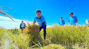 """內蒙古舉辦慶祝2021年""""中國農民豐收節""""活動"""