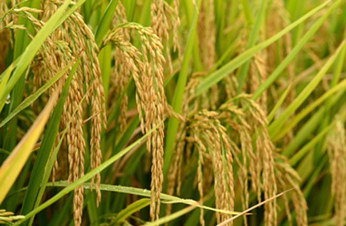 江蘇發布2021年中國農民豐收節活動安排
