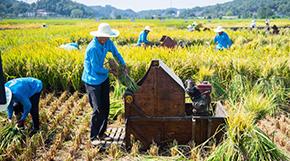 湖南長沙舉行中國農民豐收節主場活動