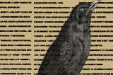 如您愛鳥,請去觀鳥切勿關鳥